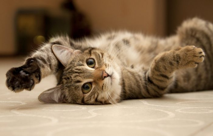 15 Easy Ways To Make Your Cat Happy